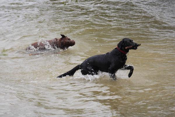 Allgäu,T-Dogs,26.-30.5.2015, Foto Nr.42