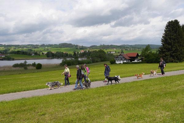 Allgäu,T-Dogs,26.-30.5.2015, Foto Nr.38