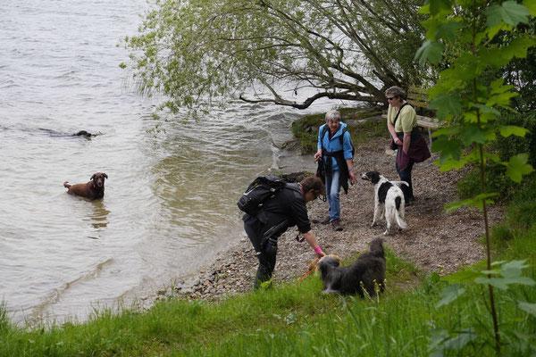 Allgäu,T-Dogs,26.-30.5.2015, Foto Nr.39