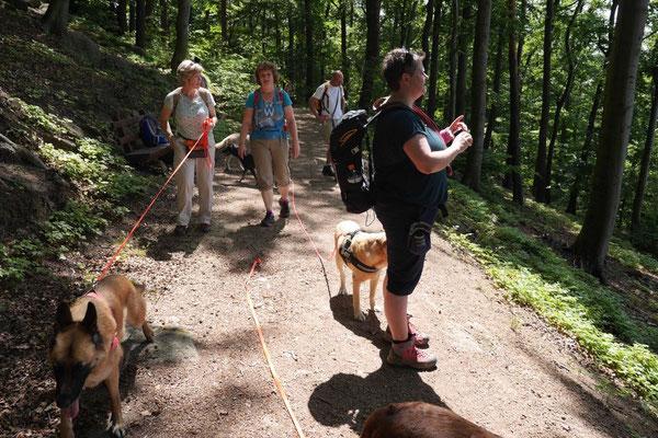 Lindenfels mit Picknick, T-Dogs, 14.6.2015, Foto Nr.9