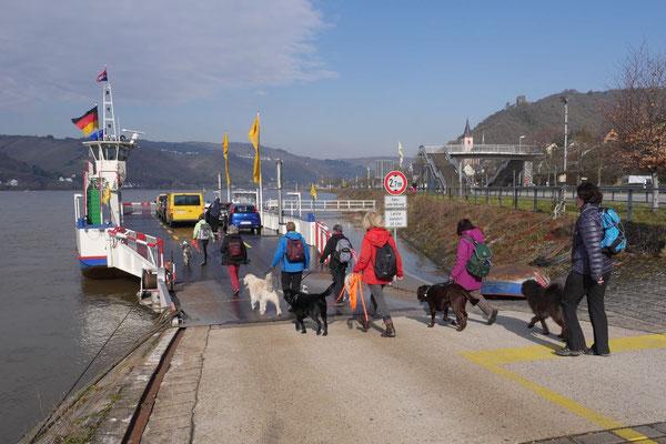 Rheingau Ostern,T-Dogs,3.-6.4.2015 Foto Nr.15