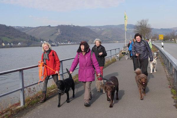 Rheingau Ostern,T-Dogs,3.-6.4.2015 Foto Nr.14
