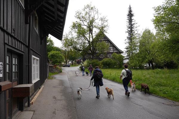 Allgäu,T-Dogs,26.-30.5.2015, Foto Nr.3