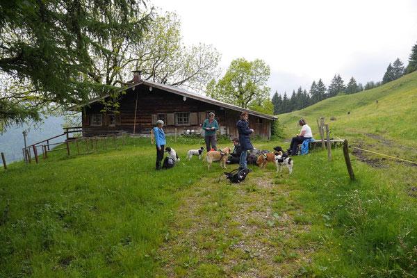 Allgäu,T-Dogs,26.-30.5.2015, Foto Nr.6