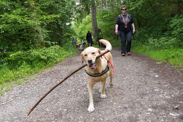 Allgäu,T-Dogs,26.-30.5.2015, Foto Nr.44
