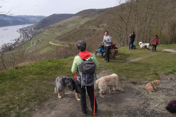 Rheingau Ostern,T-Dogs,3.-6.4.2015 Foto Nr.6