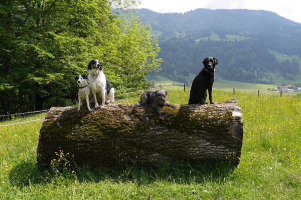 Allgäu,T-Dogs,26.-30.5.2015, Foto Nr.13