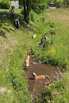 Lindenfels mit Picknick, T-Dogs, 14.6.2015, Foto Nr.15