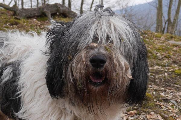 Rheingau Ostern,T-Dogs,3.-6.4.2015 Foto Nr.33