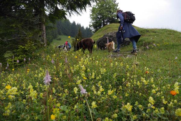 Allgäu,T-Dogs,26.-30.5.2015, Foto Nr.7