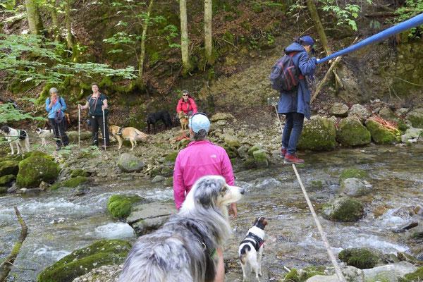 Allgäu,T-Dogs,26.-30.5.2015, Foto Nr.19