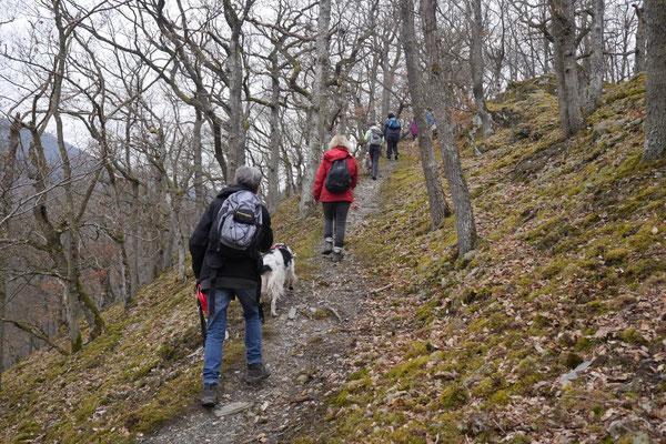 Rheingau Ostern,T-Dogs,3.-6.4.2015 Foto Nr.32