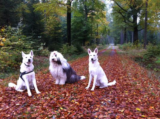 Dusty Sir und Gracie Elayne mit Hundefreundin Hermine