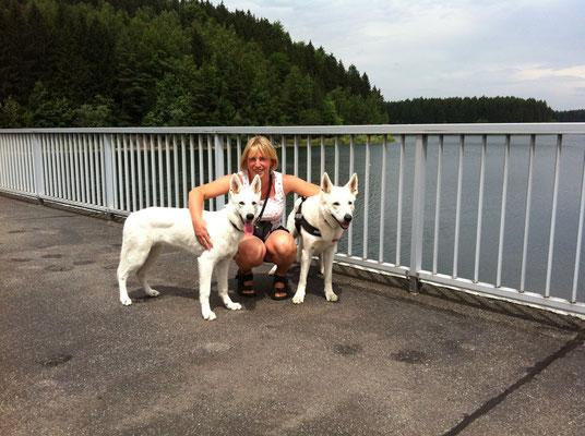 Weisse Schweizer Schäferhunde in Sachsen