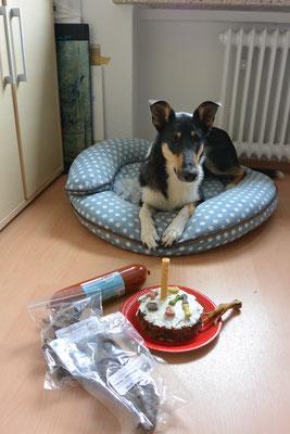 """1. Geburtstag! (1 Jahr alt) Blade liegt auf seinem Kissen, vor ihm steht eine Hundetorte mit einer Kaurolle als """"Kerze"""" und einige Geschenke."""
