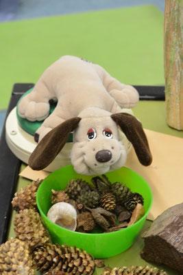 Der kleine Stoffhund Wauzi liegt auf einem Talker, vor ihm steht eine Schale mit verschiedenen Gegenständen aus dem Wald: kleine Zapfen, Hüllen von Bucheckern, ein Schneckenhaus.