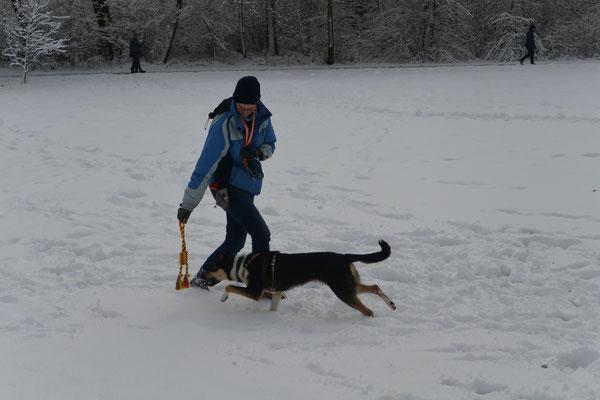 Spielen im Schnee (6 Monate alt) Blade und sein Frauchen spielen mit einem Zerrspielzeug im Schnee.
