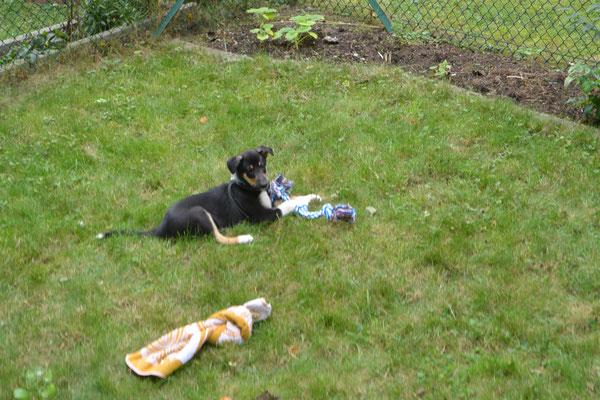 Spielen im neuen Garten (8 Wochen alt)