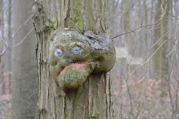"""Waldgeist """"Knorki"""" ist ein Baum, der einen dicken Knubbel am Stamm hat, der aussieht wie ein Gesicht. Damit man ihn besser erkennen kann, ist das Gesicht zusätzlich mit Farben angemalt."""