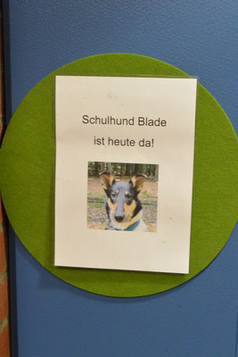 Ein Schild mit einem Foto von Blade und der Aufschrift: Schulhund Blade ist heute da. Dieses wird an der Klassenraumtür aufgehängt, wenn Blade in der Schule ist.