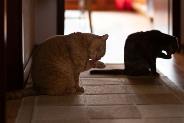 Homeshooting, Katzen, Haustier, Katzenliebhaber