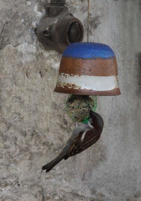Keramik Meisenglocke mit Spatz Dekor Santorin