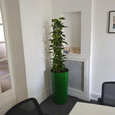 Service location et entretien de plantes