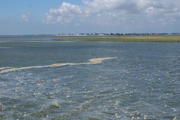 Promenade ne bateau - Baie de Somme
