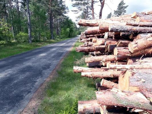 überall Holz