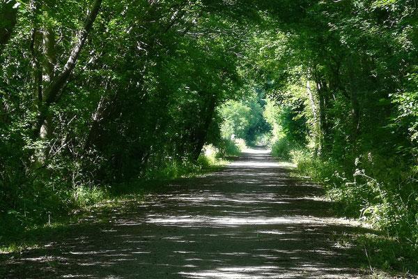 Bahntrassenradweg Rödby