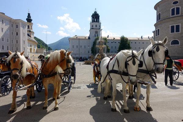 Die Pferde der Fiaker-Fahrer sind Anziehungspunkt