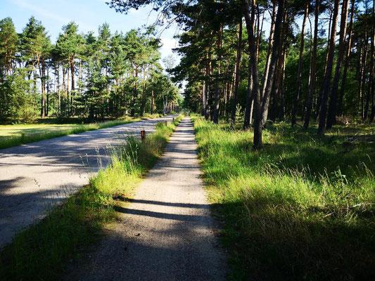 Lüneburger Heide (irgendwo)