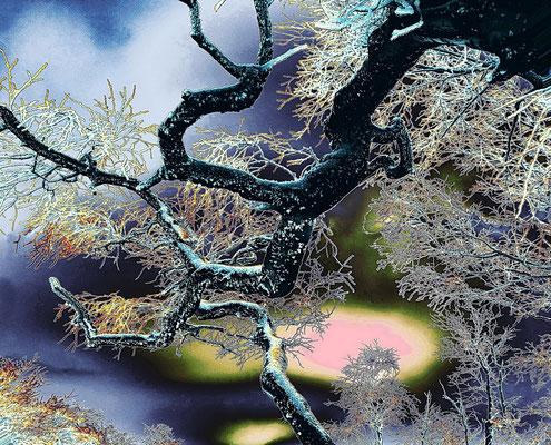 Christian Schreiterer - Natur abstrakt