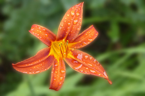Klauke-Linus-14J-Orangene_ Blume
