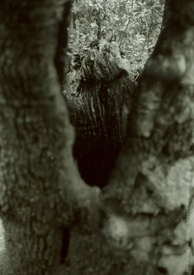 Natascha  Auenhammer - Ursprung der Höhle