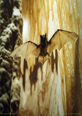 Natascha  Auenhammer - Im Innern der Höhle