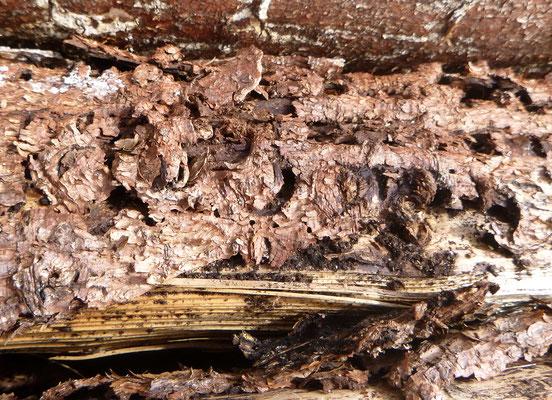Dead Wood | Foto: Carrie Haub