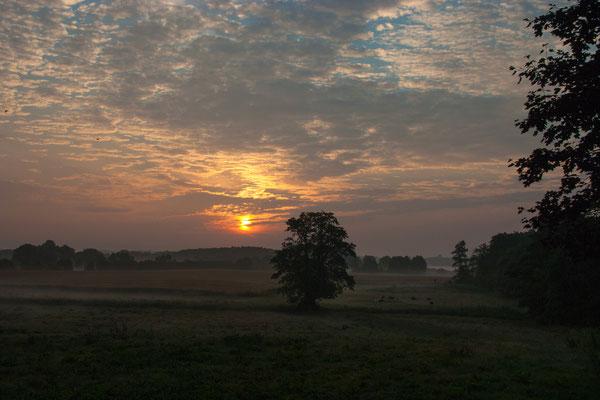 Der Morgen -Frühjahr 2014