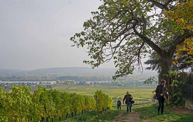 Wanderung durch die Weinberge von Schloss Johannisberg