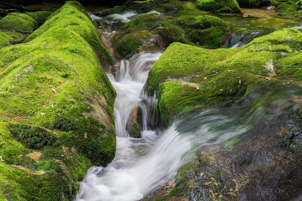 Mossy Rocks | Foto: Günter Albrecht