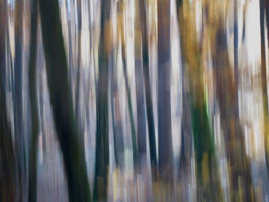 Bewegung im Wald