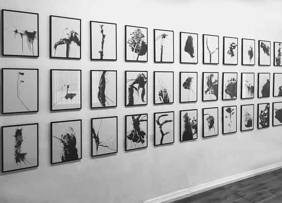 Ausstellung BRACHE 3, Zeichnungen Thomas Autering