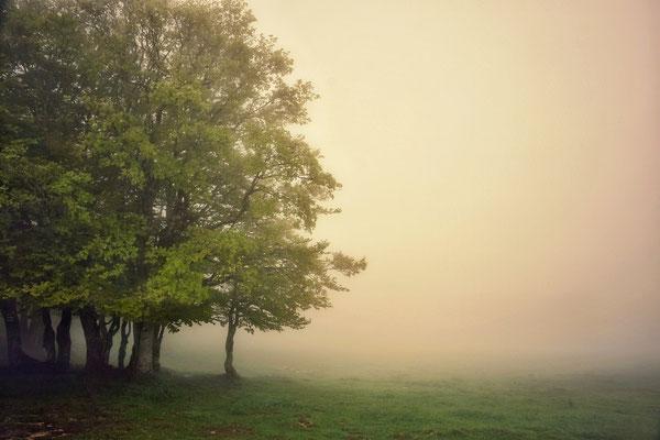 Nebel auf dem Creux du van