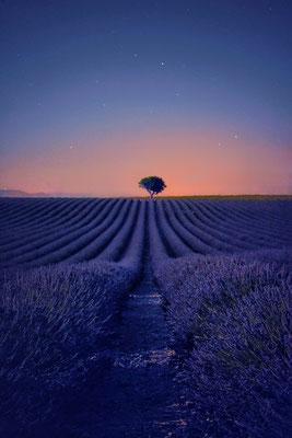 Lavendelfeld Provence France