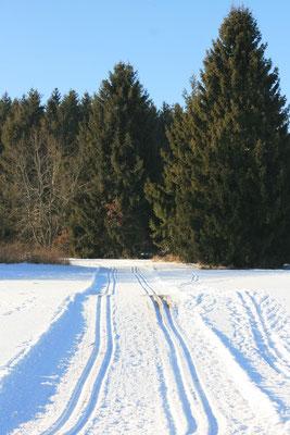 Langlauf Strecke - Essingen
