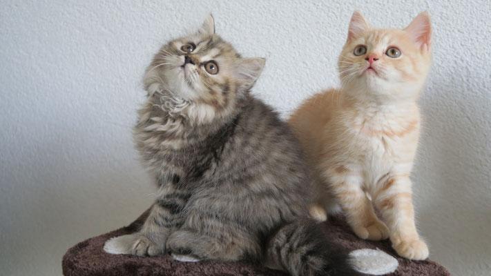 Flores und Freya