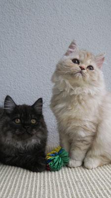 Fabiola und Faysal