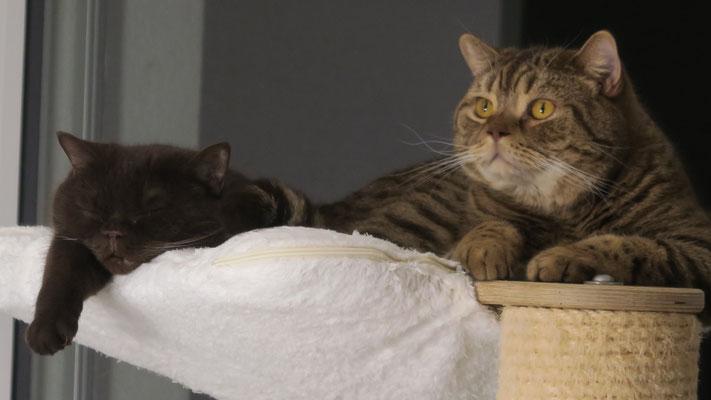 Mutter und Sohn: Abby und Chakotay