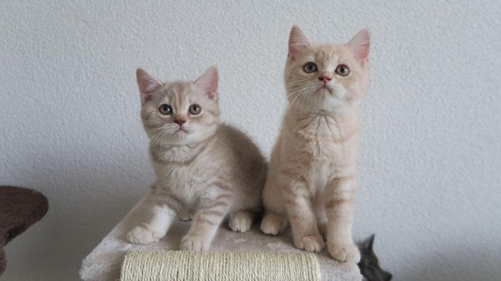 Frangipani und Fiodora