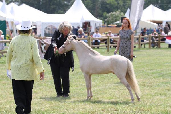 Grand Champion Stallion
